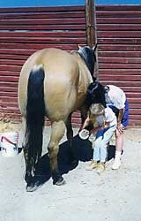 horse back riding lessons california
